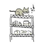 野良猫の生活