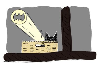 野良猫のカゴ