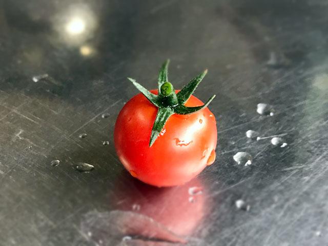 今年のトマトの初収穫