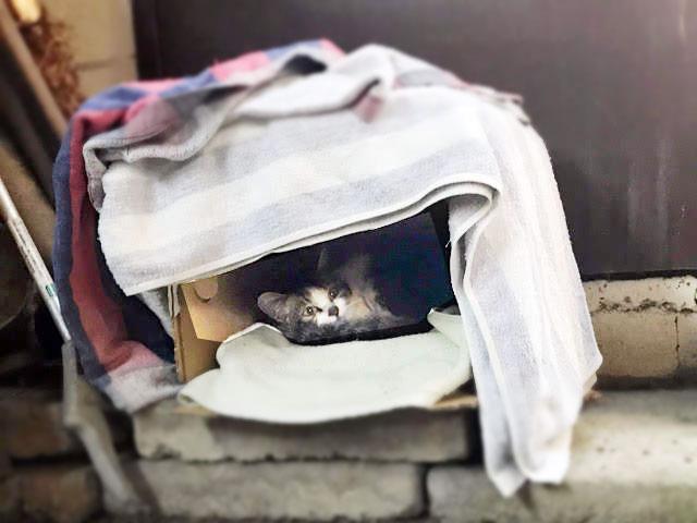 猫小屋に子猫が(冬)
