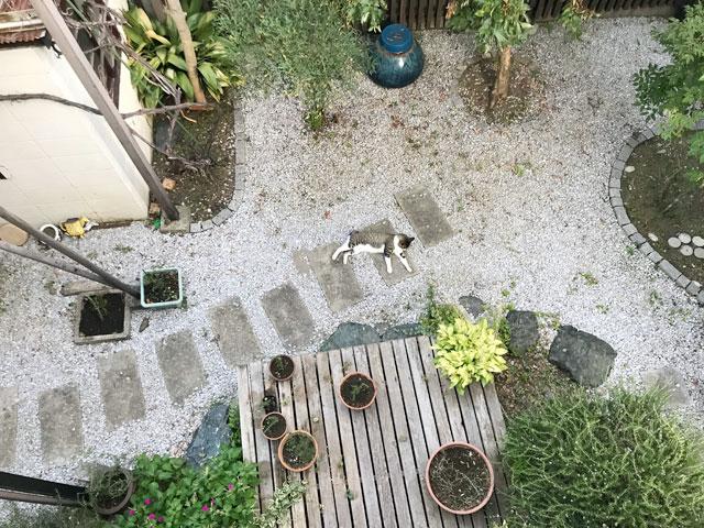 庭の真ん中で猫が寝てた